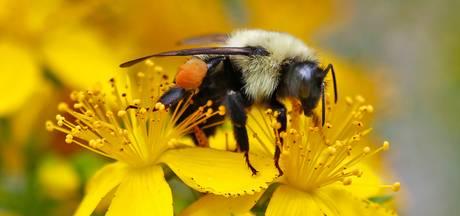Onderzoekers Radboud zien forse afname aantal insecten in Duitsland