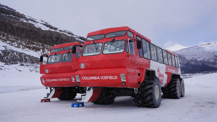 De speciaal geprepareerde toeristenbussen waarmee de zogenoemde 'sneeuwtours' in het Canadese Jasper National Park worden uitgevoerd.