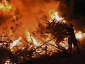 Riel houdt vast aan traditie en laat de kerstbomen branden