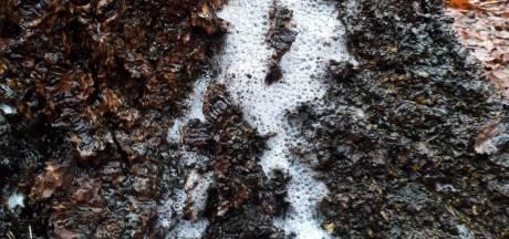 In Rijssen komt schuim uit de bomen, en dit is waarom