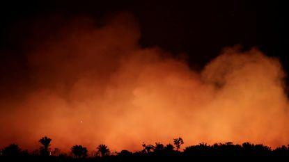 De 'longen van de wereld' staan in brand: Bolsonaro overweegt leger in te zetten tegen vuurzee in Amazonewoud