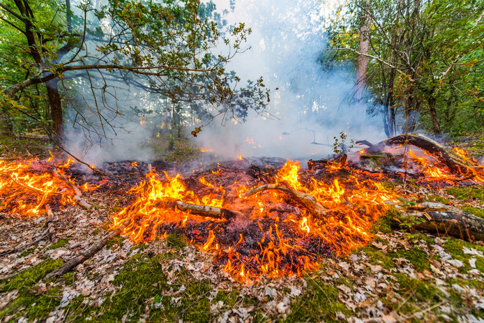 Tiende bosbrand in een week tijd in Stiphout.