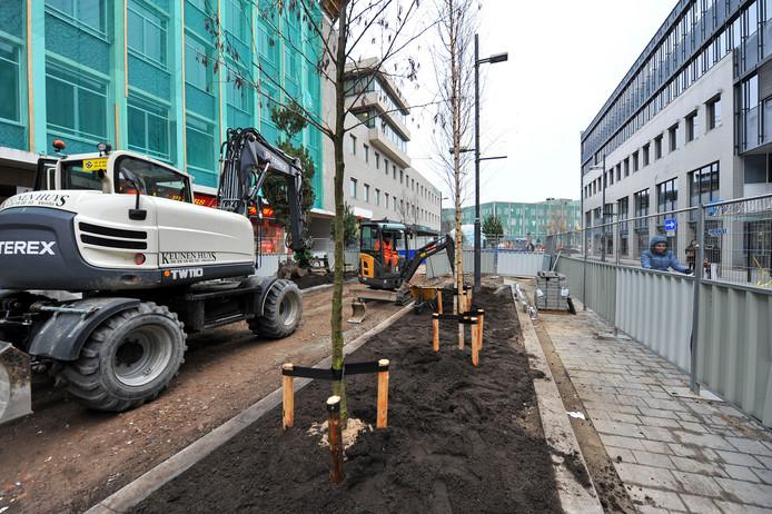 Aan de Vestdijk aan de kant van het 18 Septemberplein  worden boompjes geplaatst.