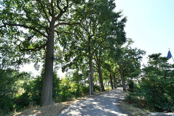 De bomen in 't Gijmink