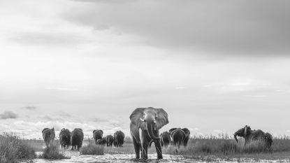 """Mijn vakantiefoto: """"Toen de olifanten de oever bereikten, draaide er eentje zich om, om duidelijk te maken dat wij best niet aan land kwamen"""""""