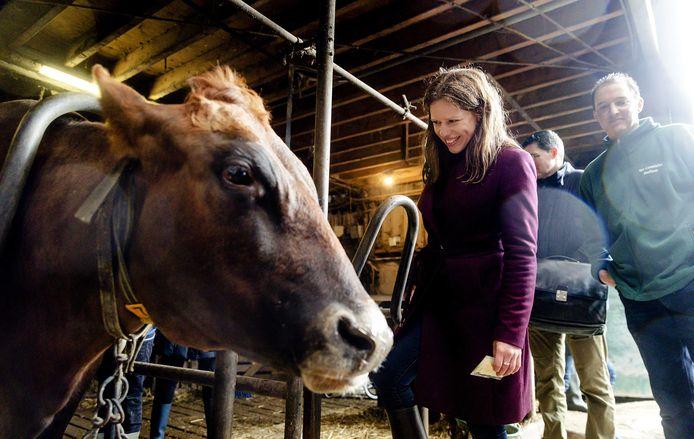 Minister Carola Schouten (ChristenUnie) op bezoek bij een koeienboer.