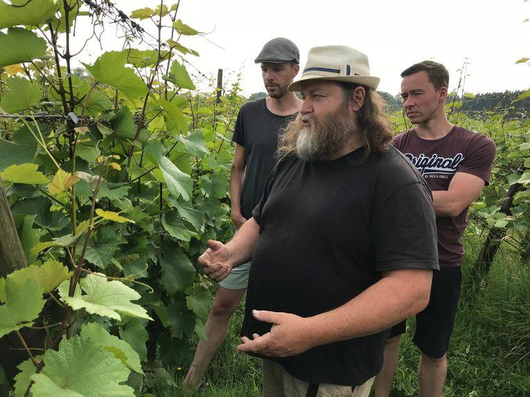 Herman Troch op zijn wijngaard aan de Affligemdreef.