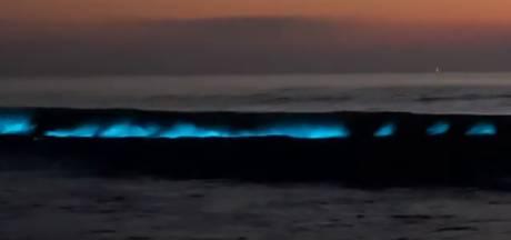 Des vagues luminescentes à la Côte belge
