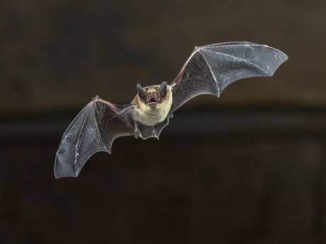 Verdachte situatie bij gemeentehuis in Wijhe? Dat is een ecoloog met sonarapparatuur voor vleermuizen