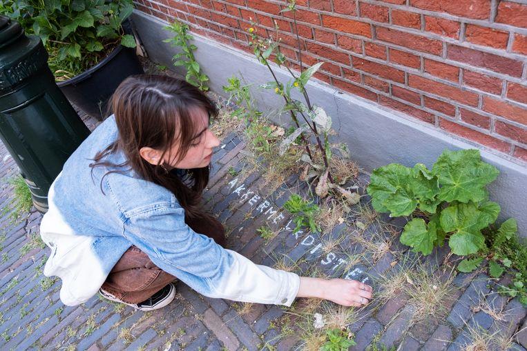 Mathilde Simons stopt in Leiden geregeld bij een plukje groen om het te voorzien van een naam als herderstasje of basterdwederik. Beeld Sabine Van Wechem