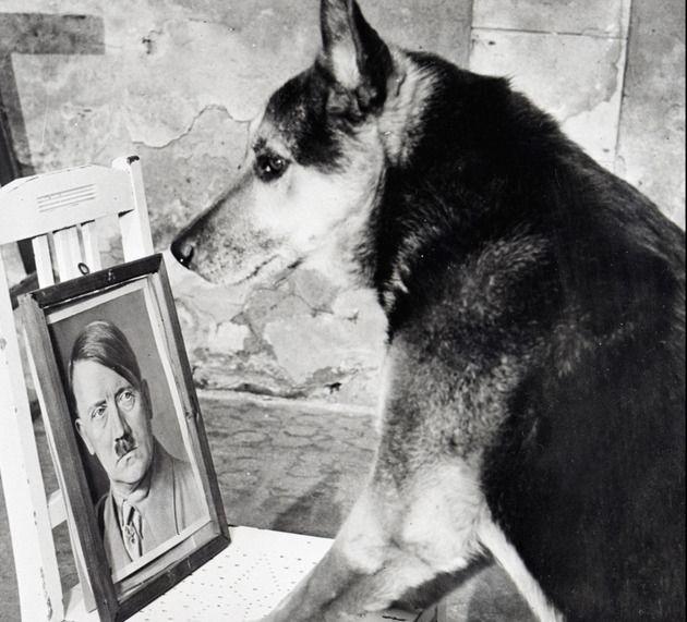 Hitler was gek op honden. FOTO'S AFP