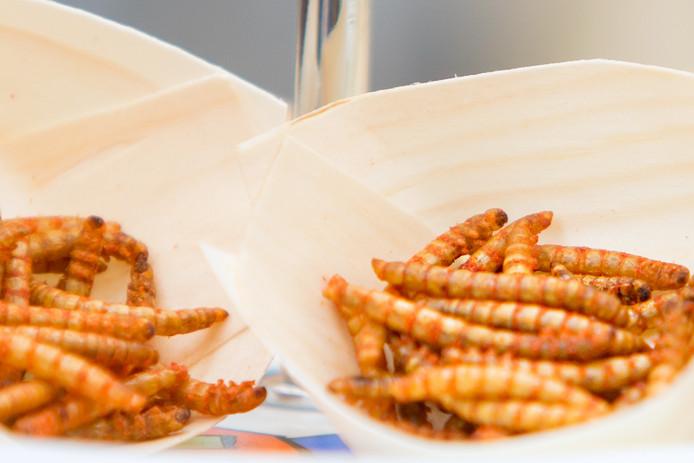 Insecten snacken: meelwormen.