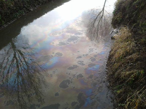 Het oliespoor in de Grote Gete liep volgens Natuurpunt van Tienen tot in Zoutleeuw.