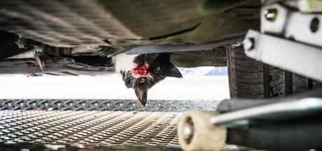 Kat zit klem onder auto en schuurt 70 km lang met bebloede snuit over A28