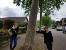 Rijssen-Holten mag platanen Van Broekhuizenstraat van rechter nog niet kappen