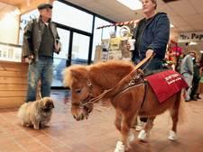 Mini-paard haalt was uit machine voor slechtziend baasje