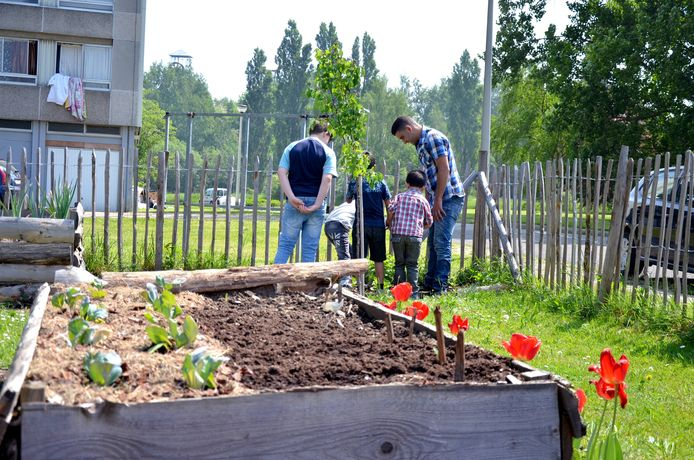 Jardin partagé de la Sambrienne, à Charleroi.