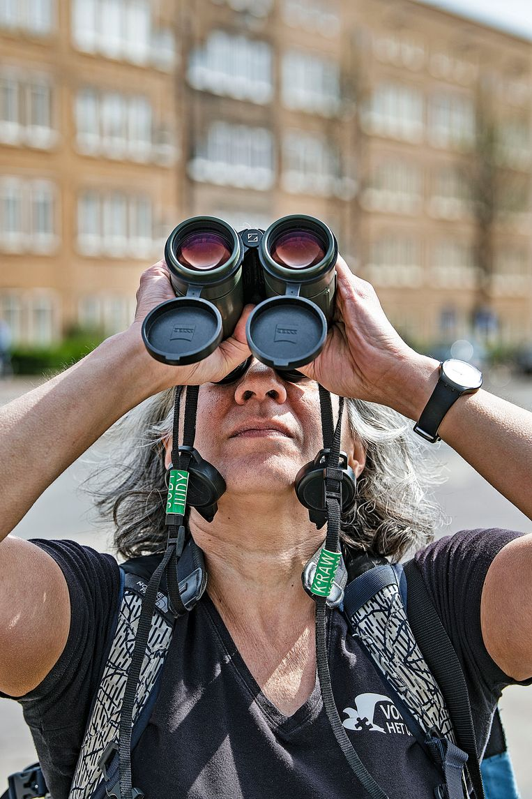 Bioloog Judy Shamoun-Baranes bestudeert het gedrag van meeuwen in een stedelijke omgeving.  Beeld Guus Dubbelman / de Volkskrant