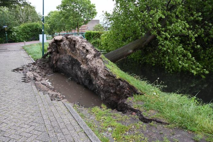 Aan de Linschoterweg in Woerden is een boom langs een sloot omgewaaid.