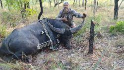 Neergeschoten waterbuffel spietst jager vlak voor zijn dood aan zijn hoorn