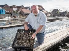 Platte Zeeuwse oester heeft niet meer nodig dan wat citroensap en wat peper
