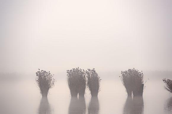 Mist in Limburg  Het Vinne Zoutleeuw