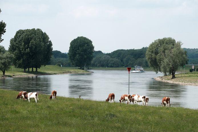 Boeren zien een vergaande kadeverlaging bij de IJssel tussen Westervoort en Rhederlaag niet zitten.