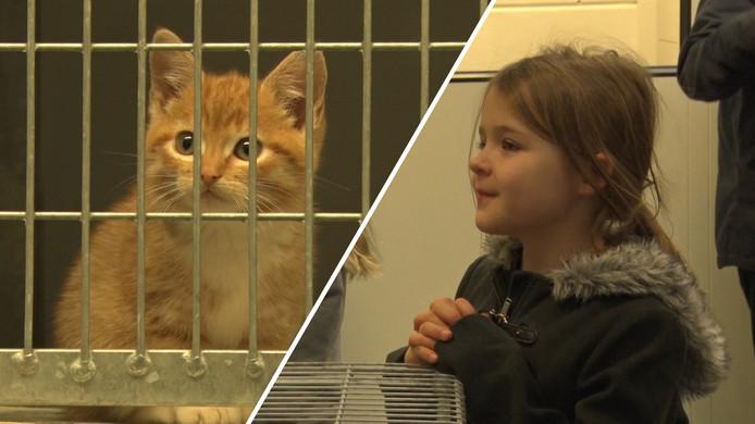 Stichting Zwerfkattenopvang Rijnmond viert het 15-jarig bestaan