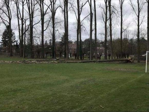 Er viel een boom op het veld van SV Ressegem.