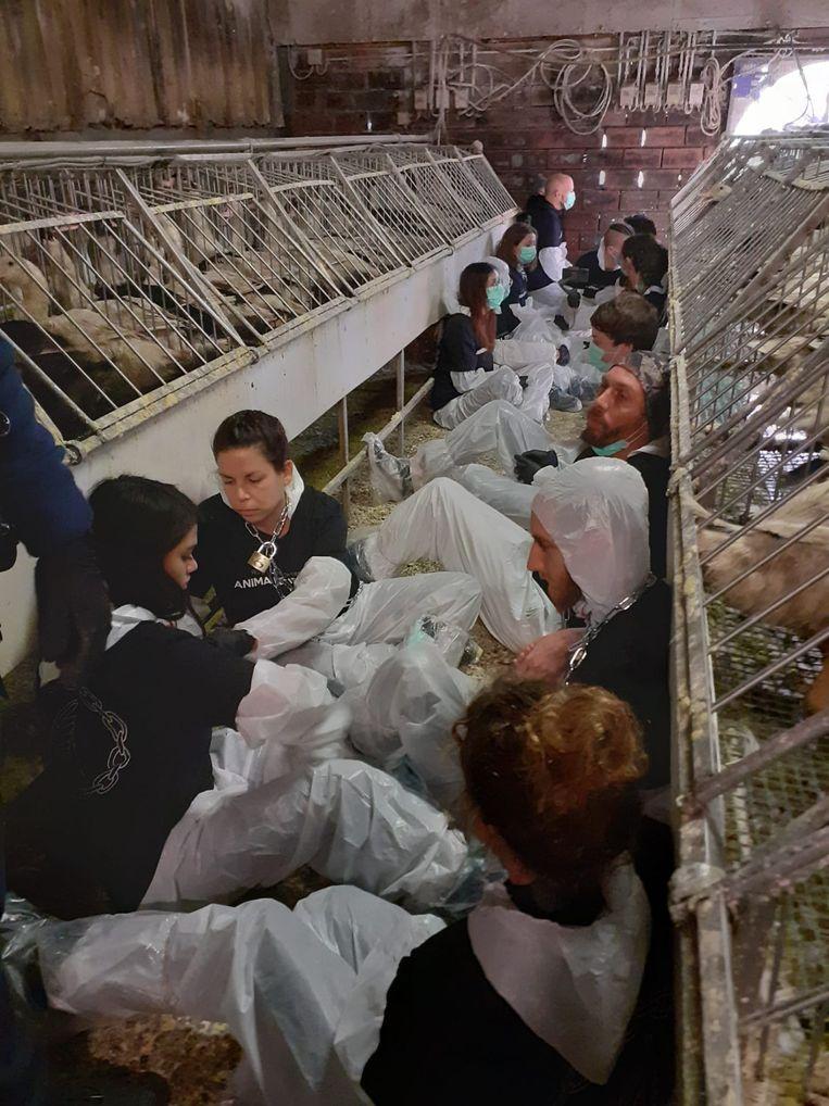 Activisten bezetten de stallen. Sommigen zijn met het lichaam vastgelijmd aan elkaar.