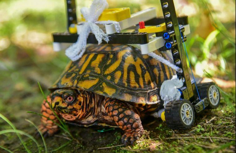Illustratiebeeld: Een schildpad met een rolstoel.