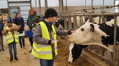 """Scholieren maken kennis met landbouwleven: """"Belangrijk dat kinderen weten waar melk vandaan komt"""""""