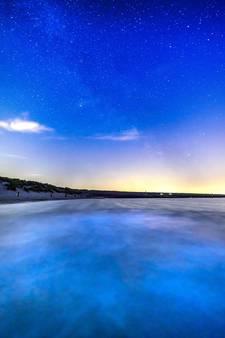 Flakkeese fotografe legt magische zeevonk vast