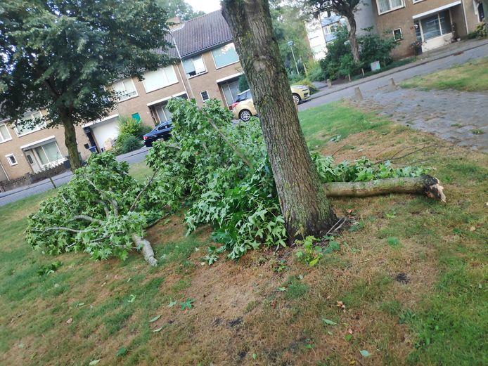 Afgebroken boom in de wijk Westrand in Roosendaal.
