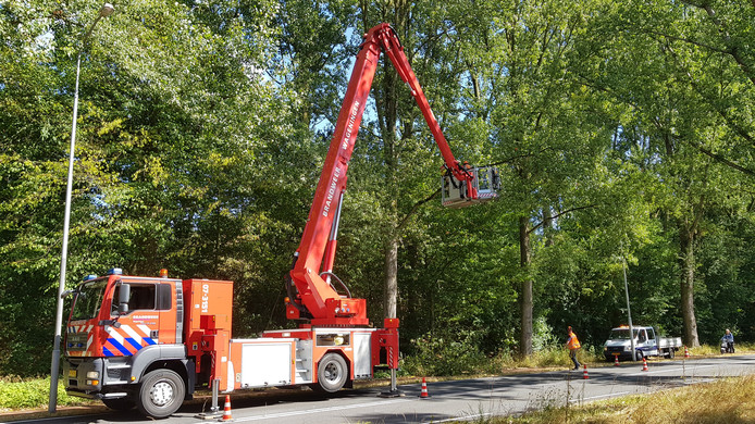 In Wageningen worden losgerukte takken verwijderd van bomen langs de Nijenoord Allee
