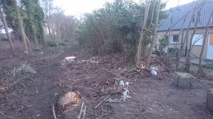 """""""Geen geluidsschermen en nu kappen ze ook nog de bomen"""": bewoners langs N31 zijn ten einde raad"""