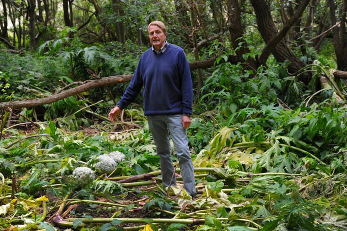 Jean-Marie van Isacker hakte eigenhandig 600 vierkante meter berenklauw aan gort. Maar daarmee is dat probleem niet opgelost en het Nollebos heeft nog meer problemen, vindt hij.