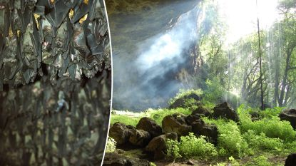 Virusjagers vonden in 2013 mogelijk voorloper van nieuw coronavirus in Chinese grot
