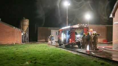 300 varkens omgekomen in stalbrand en besmet met asbest