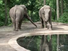 Burgers' Zoo neemt afscheid van zieke olifant Rekka