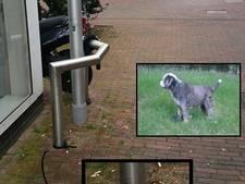 Wachtende hond Jip werd losgesneden en meegenomen uit centrum van Ede