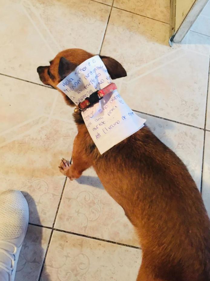 Het hondje in de winkel.