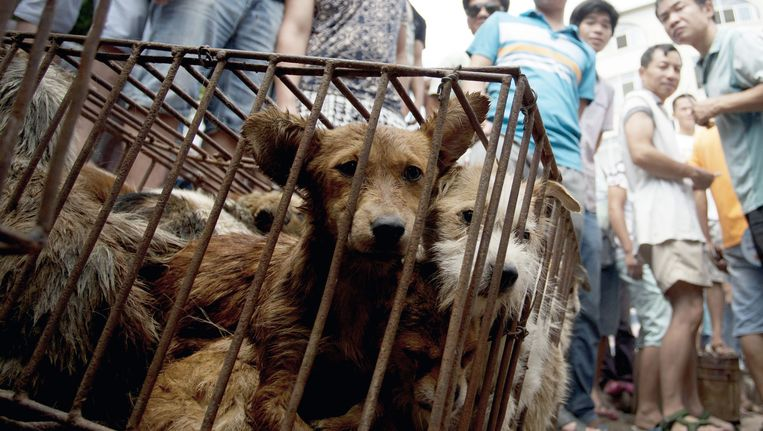 Honden in kooien op de markt in Yulin. Beeld ap