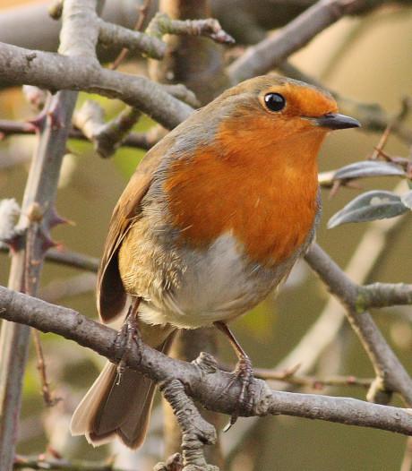 Vogels tellen en kijken in Buitencentrum in Nijverdal