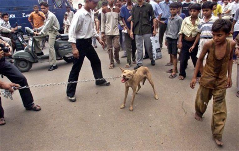 Straathonden zijn een probleem in India: ze verspreiden hondsdolheid