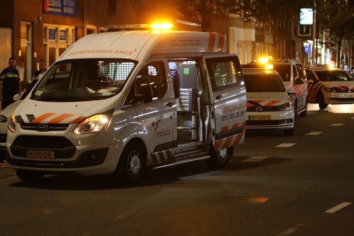 Het ongeluk vond plaats op de Elandstraat in Den Haag.