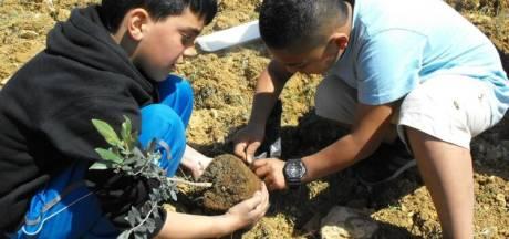 Actie voor sponsoring olijfboom: 'Enschede plant hoop in Palestina'