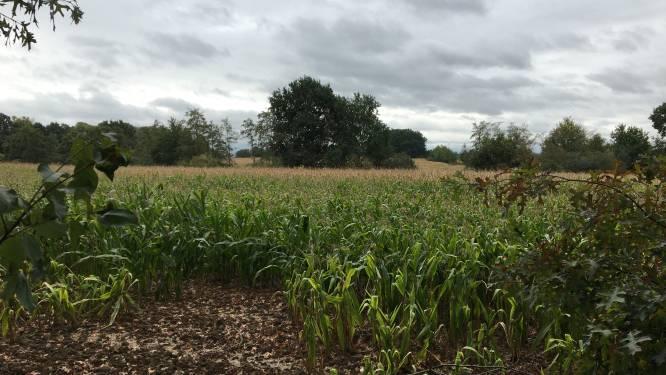 Regering belooft 56 hectare nieuwe landbouwgrond in Hasselt en Nieuwerkerken