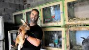 Zeldzame konijnen, ganzen en kippen ontvangen als eerste in Vlaanderen het Levend Erfgoedlabel