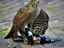 Foto in centrum Breda toont natuur van zijn wreedste kant: 'Juist dat bikkelharde maakt het prachtig'